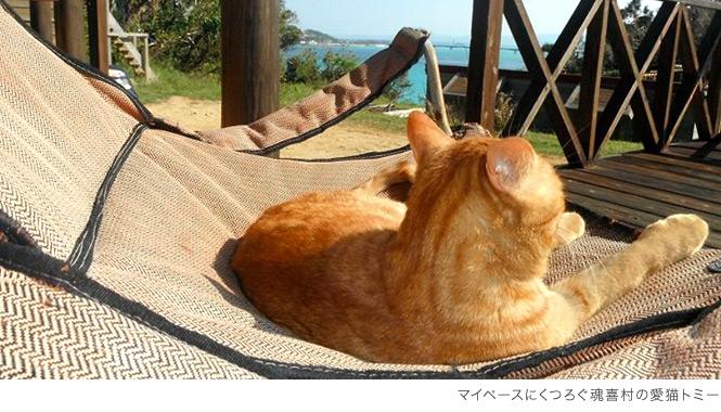 魂喜村の愛猫トミー