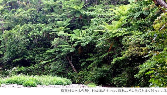 森林の自然も残る今帰仁エリア